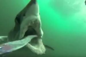 Σοκαριστικό: Δείτε πώς είναι να βρίσκεται κανείς στα σαγόνια ενός καρχαρία! (Video)