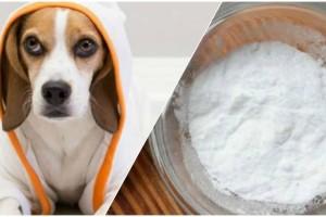 Έβαλε μαγειρική σόδα στο σκύλο της. Θα πάθετε σοκ με το αποτέλεσμα...