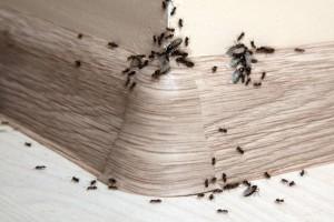 5+1 φυσικές λύσεις για να απαλλαγείτε για πάντα από τα μυρμήγκια στο σπίτι!