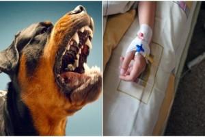 Σέρρες: 9χρονος δέχτηκε άγρια επίθεση από σκυλιά! Οι εικόνες από το νοσοκομείο σοκάρουν!