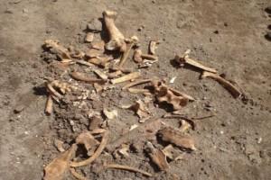 Ραγδαίες εξελίξεις με τον σκελετό που βρέθηκε στην Κέρκυρα: Τι έδειξε η ιατροδικαστική εξέταση;