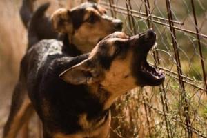 Ανείπωτη φρίκη στα Πατήσια: Ηλικιωμένη γυναίκα πέθανε και την έφαγαν τα σκυλιά της!