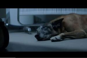 Σκύλος περίμενε το αφεντικό του έξω από το νοσοκομείο για 1 χρόνο! (Video)