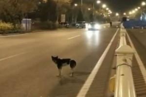 Αυτό σημαίνει αγάπη: Σκύλος περιμένει εδώ και 40 μέρες στο σημείο που πέθανε ο ιδιοκτήτης του!