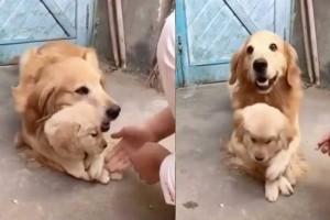 Θεά σκυλίτσα δεν επιθυμεί να αγγίζουν το μωρό της ξυπνώντας μέσα της το μητρικό της ένστικτο!