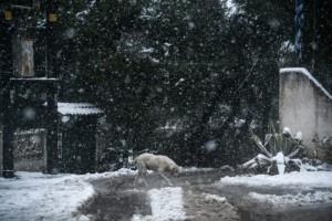 Η φωτογραφία της ημέρας: Το έστρωσε η Ζηνοβία και στην Αττική!