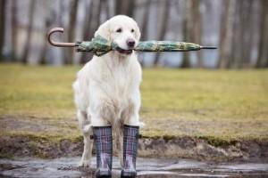 Η φωτογραφία της ημέρας: Λίγο περισσότερο αγάπη στα ζωάκια αυτές τις βροχερές ημέρες!