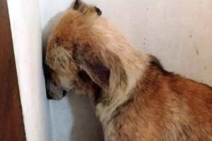 Αυτός ο σκύλος είχε κακοποιηθεί τόσο άγρια που φοβόταν ακόμη και να κοιτάξει τους ανθρώπους - Αν δείτε πως είναι σήμερα θα σας ραγίσει η καρδιά!