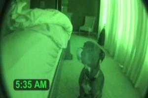 Δεν φαντάζεστε τι κάνει αυτός ο σκύλος κάθε πρωί; Έβαλε κάμερα γιατί κανείς δεν την πίστευε! (Video)
