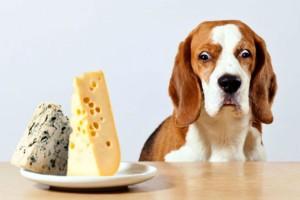 9+1 τρόφιμα που πρέπει να δίνετε στον σκύλο σας!