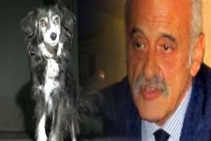 Χάτσικο στο Αίγιο: Σκυλίτσα περιμένει το αφεντικό της που «έφυγε» από τη ζωή! (Video)
