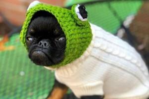 Αυτός ο σκύλος έγινε viral επειδή έχει... νεύρα!