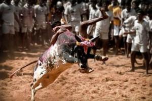 Τραγωδία στην Ινδία: Ένας νεκρός και δεκάδες τραυματίες σε φεστιβάλ ροντέο!