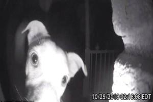 Σκύλος στις 2 τα ξημερώματα στέκεται έξω από την εξώπορτα του αφεντικού! Αυτό που καταγράφει η κάμερα θα σας κάνει να δακρύσετε!