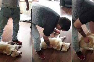 Σκύλος κάνει τον πεθαμένο. Όταν μάθετε τον λόγο θα πάθετε πλάκα!