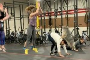 Αυτός ο σκύλος μπήκε μέσα σε ένα γυμναστήριο! Η συνέχεια θα σας ξετρελάνει!