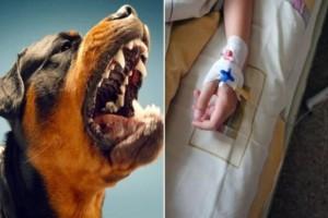 7χρονο αγοράκι δέχτηκε άγρια επίθεση από αγέλη σκύλων!