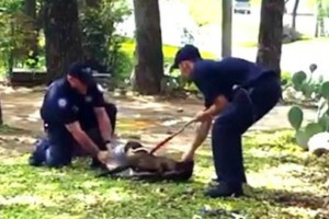 Αστυνομικοί ακινητοποίησαν έναν σκύλο. Όταν είδαμε τι κατέγραψε η κρυφή κάμερα, παγώσαμε!