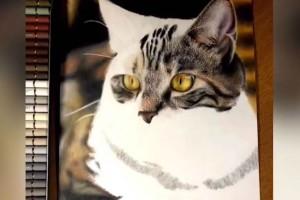 Πιστεύετε ότι είναι γάτα; Μόλις δείτε την αλήθεια θα πάθετε πλάκα!