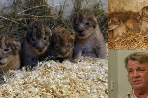 Μπήκαν στο ζωολογικό κήπο και είδαν αυτά τα λιονταράκια. Δυστυχώς όμως είχε γίνει το απίστευτο!