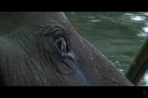 """Ελέφαντας 76 ετών ζούσε φυλακισμένος όλη του την ζωή μέχρι που...Θα """"λυγίσετε"""" με την συνέχεια!"""