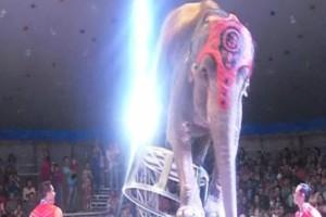Τραγικό! Ελέφαντας έπεσε στο τσίρκο ενώ εκτελούσε ένα κόλπο! Τότε οι υπόλοιποι ελέφαντες έκαναν...