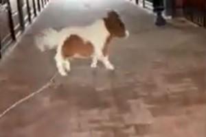 Νομίζετε ότι βλέπετε σκύλο; Μόλις δείτε το βίντεο θα αλλάξετε γνώμη!
