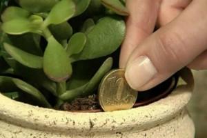 Βάλτε αυτό το φυτό στο σπίτι σας και...τα χρήματα στην τσέπη σας θα αρχίσουν να αυξάνονται!