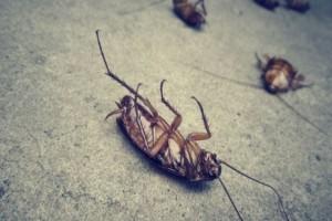 11+1 τρόποι για να απαλλαγείτε από τις κατσαρίδες! (Video)