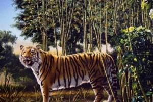 Το 95% των ανθρώπων δεν εντοπίζει την δεύτερη τίγρη στη φωτογραφία. Εσύ μπορείς;