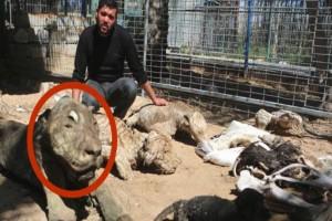 Μπήκαν στον ζωολογικό κήπο και αντίκρισαν αυτό το λιοντάρι...Δυστυχώς ήταν πολύ αργά, το κακό είχε συμβεί!