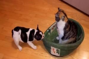 Αυτός ο σκύλος νύσταζε και πήγε στο κρεβάτι του όταν...αντίκρισε μια γάτα να του έχει πάρει την θέση. Θα σας φτιάξει την μέρα!