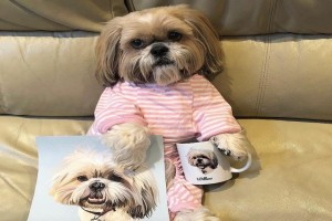 Σκύλος με 12.000 ακόλουθους στο Instagram, υπέγραψε συμβόλαιο με πρακτορείο...μοντέλων! Θα πάθετε πλάκα!