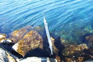 Ένας 16χρονος πήγε για ψάρεμα και δεν μπορείτε να φανταστείτε τι του έκανε αυτό το ψάρι! (photos)