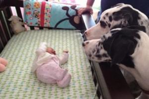 Αυτοί οι γονείς άφησαν το μωρό τους μόνο του με το σκύλο -  Όταν επέστρεψαν, βρήκαν αυτό!