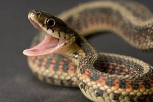Απίστευτο! Το φίδι δάγκωσε τον άνδρα κι εκείνος έκανε την πιο αδιανόητη ενέργεια!