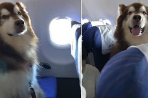 Αυτός ο σκύλος μπήκε σε αεροπλάνο - Μόλις μάθετε τον λόγο θα δακρύσετε