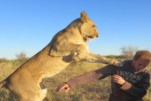 Λιοντάρι ετοιμάζεται να ορμήξει σ' αυτόν τον άνδρα! Δευτερόλεπτα μετά γίνεται το απίθανο!