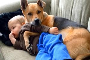 Μωράκι ψηνόταν στον πυρέτο: Τότε το σκυλί της οικογένειας κάνει κάτι το μοναδικό! Θα λυγίσετε (video)