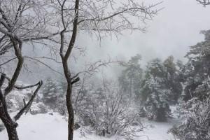 Η φωτογραφία της ημέρας: Στην χιονισμένη Πάρνηθα!