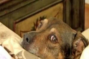 O σκύλος αισθάνθηκε περίεργα με το μωρό - Τότε πήδηξε αμέσως στο κρεβάτι και...