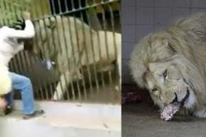 Λιοντάρι άρπαξε και δάγκωσε το χέρι ενός άνδρα σε ζωολογικό κήπο - Η συνέχεια θα σας κόψει την ανάσα
