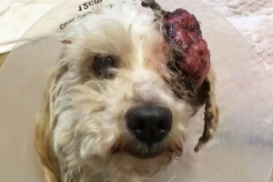 Ραγίζει καρδιές: Ο κτηνίατρος ήταν έτοιμος να κάνει ευθανασία στον σκύλος λόγω του τεράστιου όγκου - Ωστόσο στη συνέχεια...