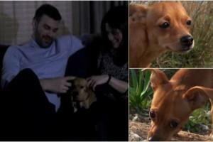 Θα σας συγκινήσει: Η ιστορία της τρίποδης σκυλίτσας που πρωταγωνιστεί στο βιντεοκλίπ του Γιώργου Σαμπάνη