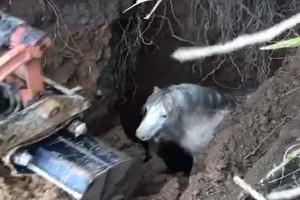 Οι κραυγές του αλόγου ακούγονταν για ώρες αλλα δεν ξέραν από πού - Τότε εντοπίστηκε μέσα σε μια τρύπα και...