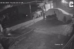 Κάμερα ασφαλείας κατέγραψε ένα λιοντάρι να ορμάει σε μια αγελάδα. Αυτό που ακολούθησε θα σας σοκάρει!