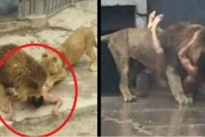 20χρονος θέλησε να ταΐσει τον εαυτό του στα λιοντάρια - Λίγο μετά τον είδαν και...