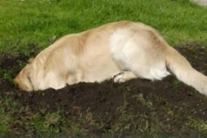 Αυτός ο σκύλος ξεκίνησε να σκάβει στην αυλή - Ο ιδιοκτήτης του έπαθε σοκ με αυτό που βρήκε
