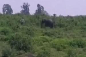 Απίστευτο: Ένας άνδρας πλησίασε έναν ελέφαντα για να βγάλει μαζί του μια selfie! Αυτό που ακολούθησε θα σας σοκάρει!