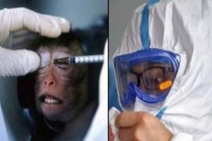 Επιστήμονες κάνουν πειράματα σε μαϊμούδες για να βρουν εμβόλιο για τον κορωναϊό - Οι εικόνες σοκάρουν